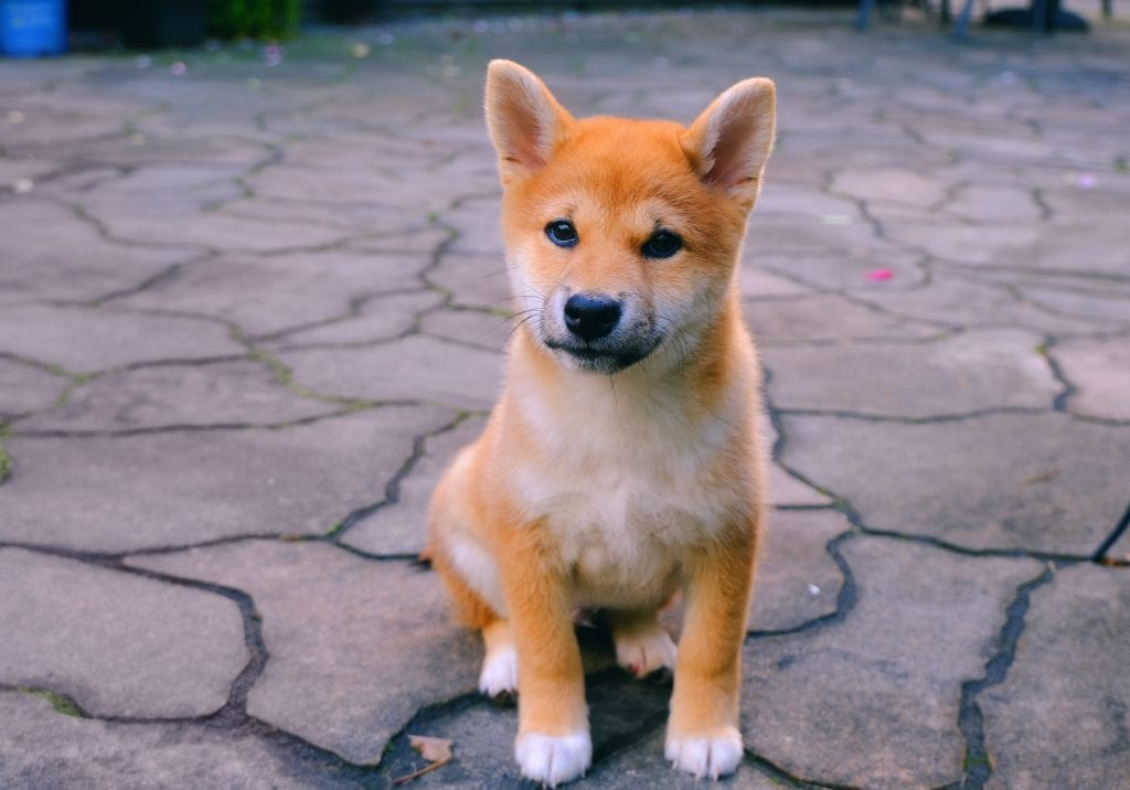 Dogecoin (Doge) Rallies 40% In a Day—And No One Has a Clue Why