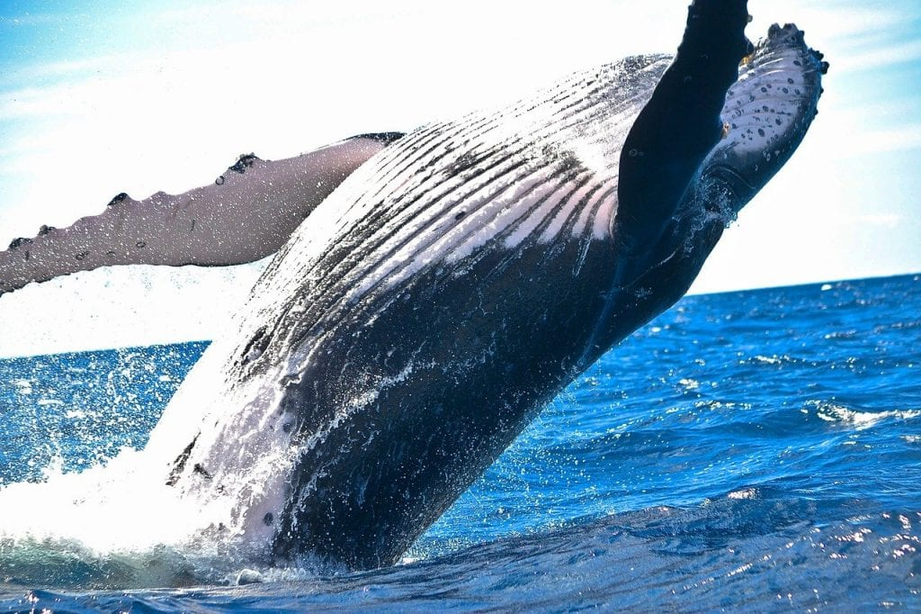 Are whales accumulating Bitcoin between $30K and $40K?