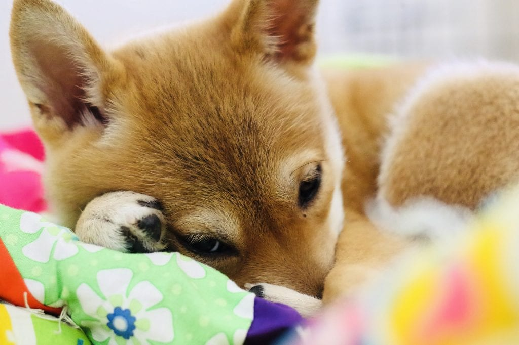 dogecoin, Elon, the 'Dogefather' does it again, with both DOGE and 'BABYDOGE'