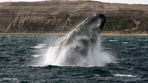 Bitcoin accumulation whale fish stablecoin