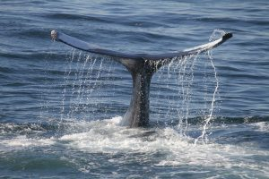 Coinbase whales behind the latest Bitcoin bull run towards $47K, data suggests