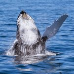 Bitcoin whale accumulation heats up as BTC holds above $47K