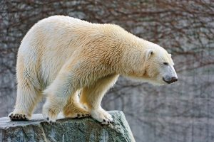 Avalanche grapples with serious bearish outlook despite AVAX's 57% rebound to record high