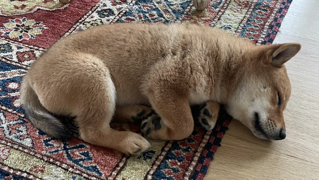 Elon Musk shared a picture of his new Shiba Inu puppy Floki, sending the prices of Floki-themed tokens up. FLOKI up almost 100 per cent.